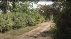 Волгодонский дендрологический парк возрождает редкие деревья