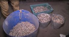 Уничтожение браконьерских снастей