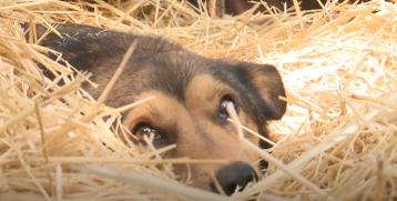 Агрессивное нападение человека на собаку в хуторе Потапов
