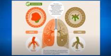 Рубрика «Совет врача». Обструктивная болезнь легких