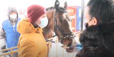 Открытие 7 сезона по иппотерапии в центре «Добрая лошадка»