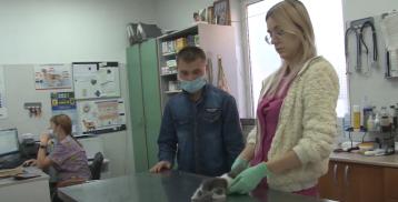 День ветеринарного врача